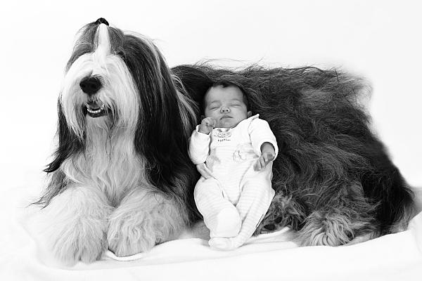 Tierfoto langhaariger, liegender Hund, an dessen Bauch ein Baby in hellem Strampler schlafend liegt.