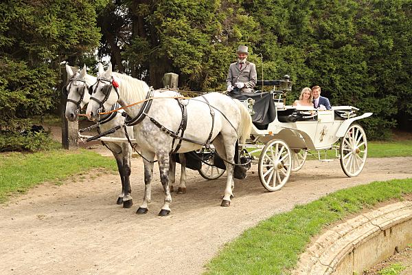 Brautpaarfoto in der weissen Kutsche mit 2 weisen Pferden