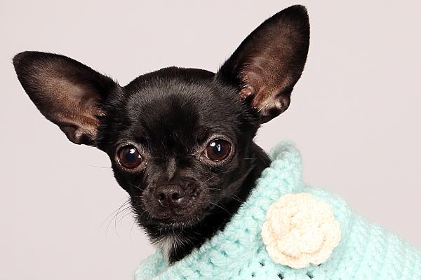 Foto von einem kleinem schwarzen Hund